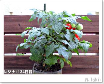ペット栽培II(レジナ)42