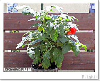 ペット栽培II(レジナ)45
