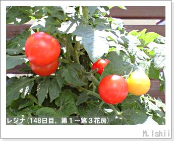 ペット栽培II(レジナ)46