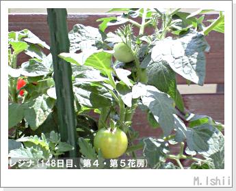 ペット栽培II(レジナ)48
