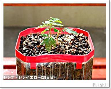ペット栽培III(レジナ)14