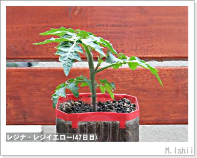 ペット栽培III(レジナ)25