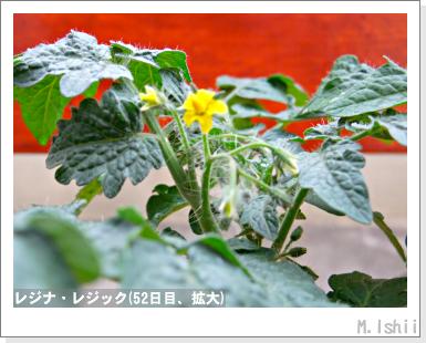 ペット栽培III(レジナ)30