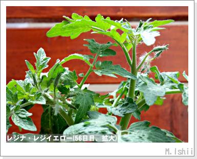 ペット栽培III(レジナ)34