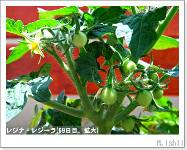 ペット栽培III(レジナ)47