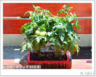 ペット栽培III(レジナ)56