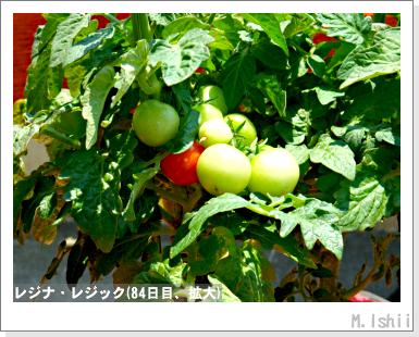 ペット栽培III(レジナ)57
