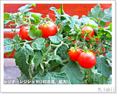 ペット栽培III(レジナ)71
