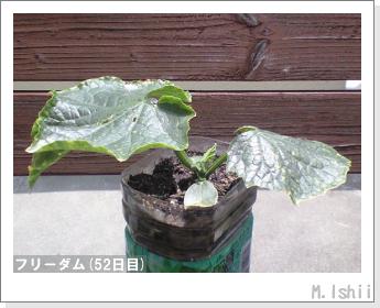 ペット栽培(フリーダム)09