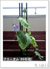 ペット栽培(フリーダム)11