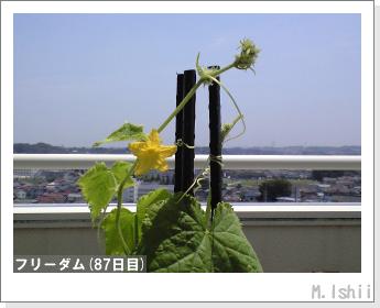 ペット栽培(フリーダム)12