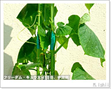 ペット栽培・試験録(フリーダム)32