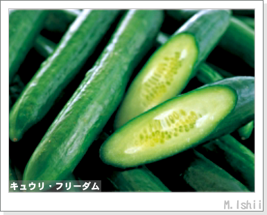 ペット栽培III(キュウリ)01
