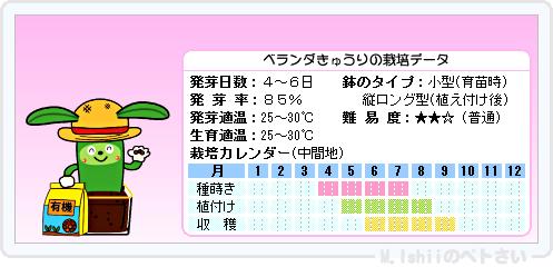 ペトさい(ベランダきゅうり)15