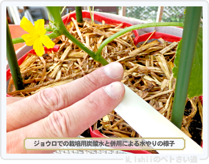 ペトさい(ミニきゅうり・改)51
