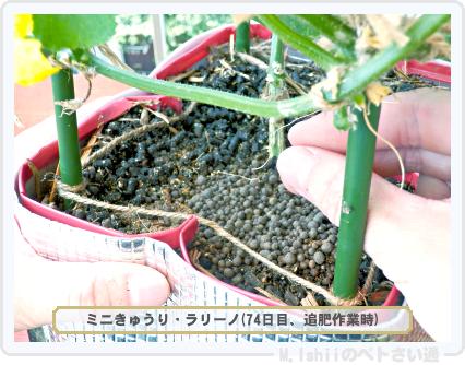 ペトさい(ミニきゅうり・改)76