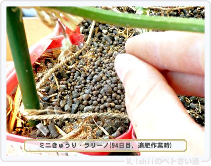 ペトさい(ミニきゅうり・改)89