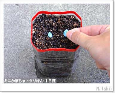 ペット栽培III(ミニかぼちゃ)05
