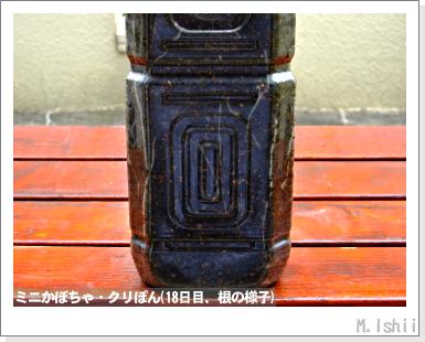 ペット栽培III(ミニかぼちゃ)10