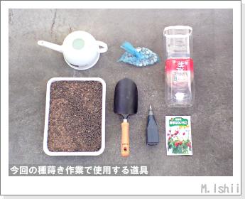ペット栽培II(四季なりイチゴ)03