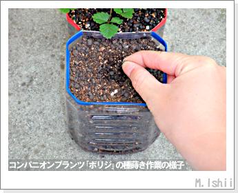 ペット栽培II(四季なりイチゴ)62