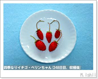 ペット栽培II(四季なりイチゴ)98