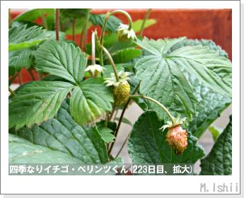 ペット栽培II(四季なりイチゴ)100