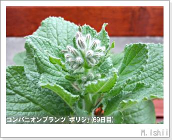 ペット栽培II(四季なりイチゴ)112