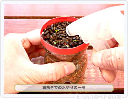 ペトさい(採種イチゴ・改)025