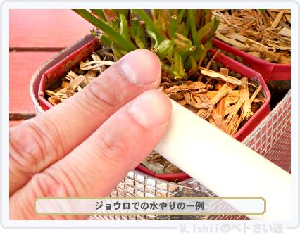ペトさい(採種イチゴ・改)059
