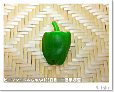 ペット栽培III(ピーマン)50