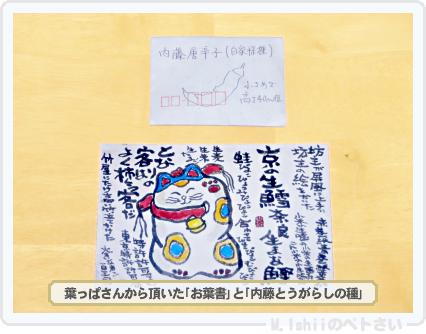 ペトさい(内藤とうがらし)02