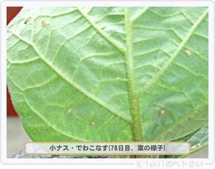 ペトさい(小ナス)23