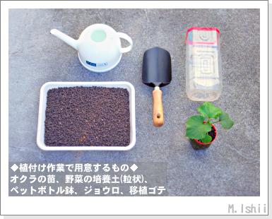 ペット栽培III(オクラ)15