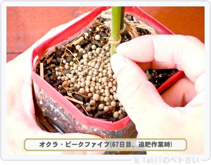 ペトさい(オクラ)51