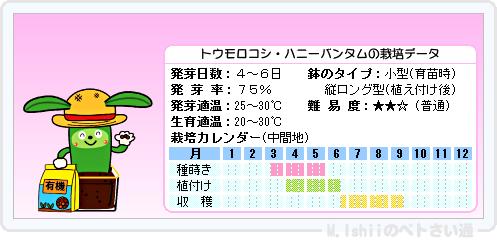 ペトさい(トウモロコシ)14