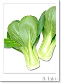 ペット栽培II(チンゲン菜)01