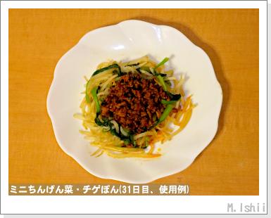 ペット栽培III(ミニちんげん菜)13
