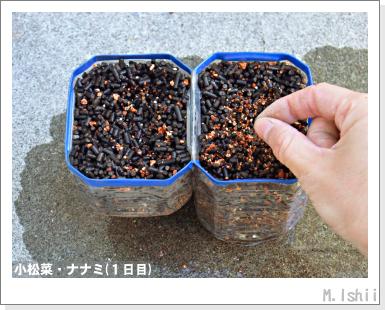 ペット栽培III(小松菜)04
