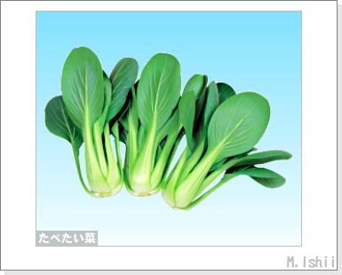 ペット栽培III(たべたい菜)02