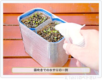 ペトさい(たべたい菜)18