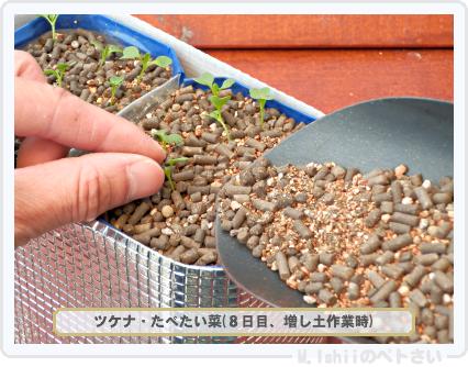 ペトさい(たべたい菜)22