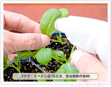 ペトさい(たべたい菜)33