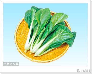 ペット栽培III(ビタミン菜)02