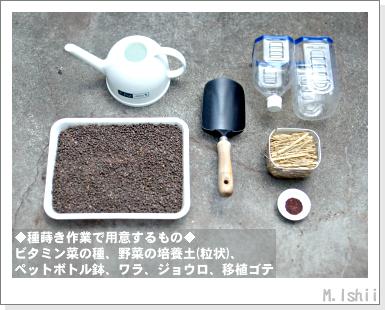 ペット栽培III(ビタミン菜)03