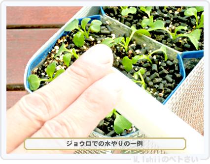 ペトさい(べんり菜)23