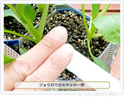 ペトさい(べんり菜)33