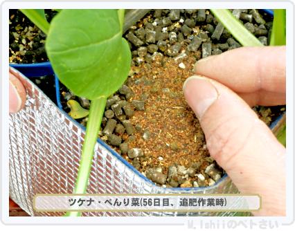 ペトさい(べんり菜)36