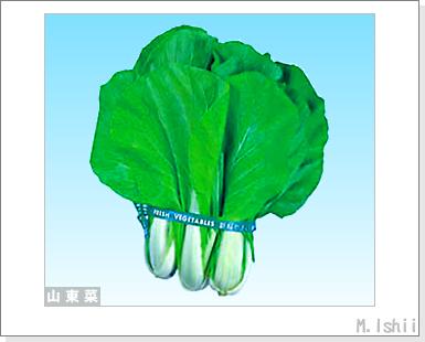 ペット栽培III(山東菜)01