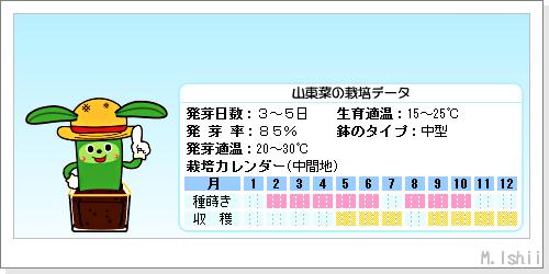 ペット栽培III(山東菜)02